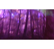 Magick in the Wood n°3 Photographic Print
