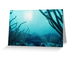 Sunlit Soft Corals Greeting Card