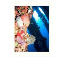 Corals at Pier 1 Art Print