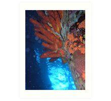 Corals at Pier 2 Art Print