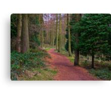 Walk Through The Trees Canvas Print