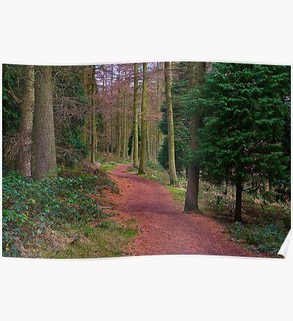 Walk Through The Trees Poster