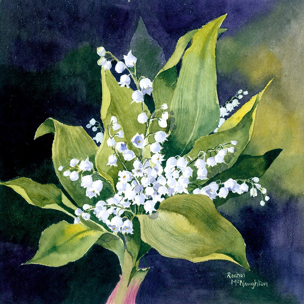 Lily of the Valley by artbyrachel