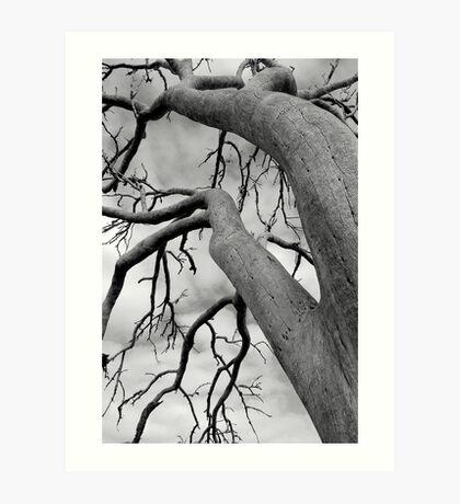 remnant tree Art Print