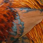 Cockrel Feathers by Pamela Baker