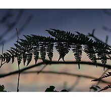 Fern at sunset - Co Cork, Ireland Photographic Print