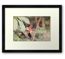 Butterfly nature photography Framed Print