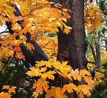 Autumn Day by eliz134