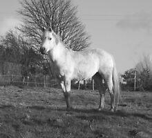 horses by Dani Hughes