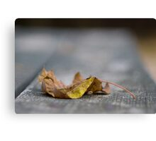 Autumn - Raleigh NC Canvas Print