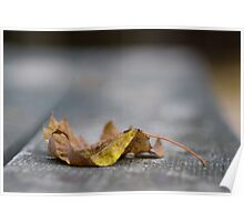 Autumn - Raleigh NC Poster