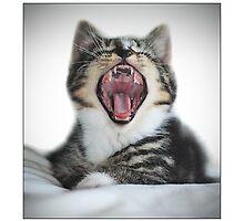 Teddy - (RROOARRRRR!!!!!!!) by MoGeoPhoto