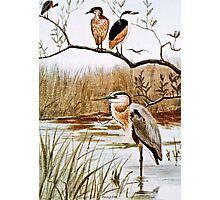 Herons Vintage Art Photographic Print