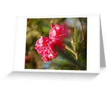 Pink petals greet the morning light. Greeting Card