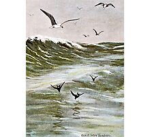 Gulls on The Ocean Photographic Print