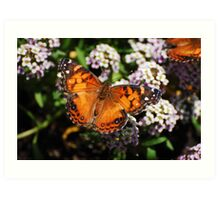 Brookfield Zoo - Butterfly suckling. Art Print