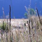 Washington Beauty by karolina