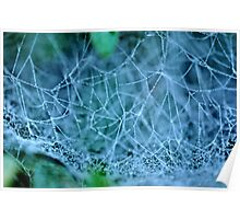 Spider's Water Web Poster