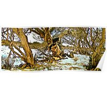 Gum trees and Snow - Selwyn 1 Poster