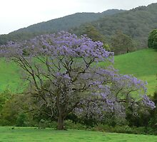 Jacaranda In The Promised Land by louisegreen