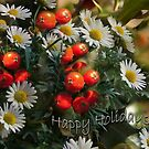 Daisies and Holy - Holidays greeting card-full by steppeland