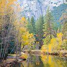 Merced River Foliage by William Hackett