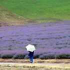 Lavender Field on a Rainy Day in Tasmania by buttonovski