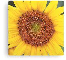 Sunflower Photograph Canvas Print