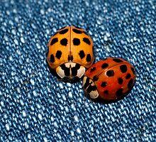 Buggy Buddies by Bonnie T.  Barry
