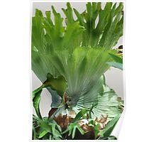 Super Salad Poster