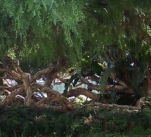 Gnarly Tree by Gloria Abbey