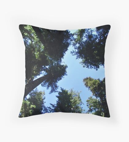Cathedral Grove Throw Pillow