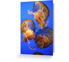 Jellys in the deep blue Greeting Card