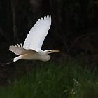 Egret at Fogg Dam Reserve, Northern Territory by Erik Schlogl
