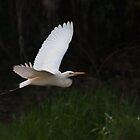 Egret at Fogg Dam Reserve, Northern Territory by Erik Schlogl