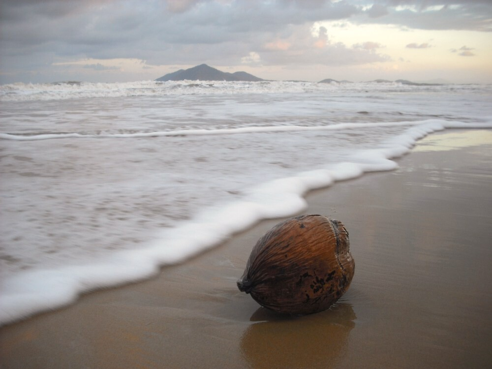 Coconut, Dunk Is by jasondean
