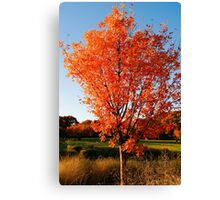 A Shock of Orange Against A Blue Sky Canvas Print