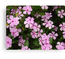 Pink Flower Spiral-(Floral Macro) Canvas Print