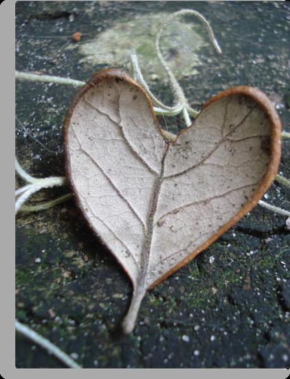 "The ""I Love You"" Leaf by May Lattanzio"