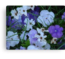 Purple & White-(Today & Tommorrow)-(Floral Macro) Canvas Print