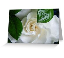Gardenia Kissed with Rain Greeting Card