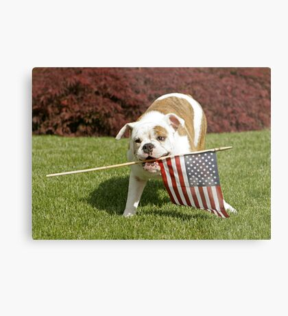 Yankee Doodle Doggie Metal Print