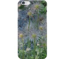 Withered Beauty in Dappled Sunlight iPhone Case/Skin