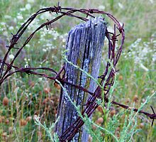 Old Fence Post by shimschoot