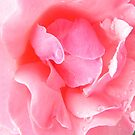 In the Pink by Chris Armytage™