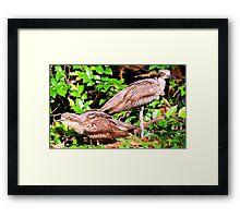 A loving couple Framed Print