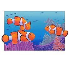 Clownfish Photographic Print
