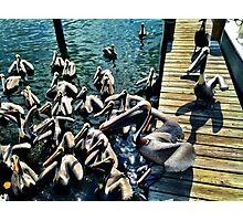 Pelican Alley Photographic Print