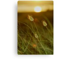 Bunny tails Canvas Print