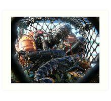Fresh caught lobsters - Islay, Scotland Art Print
